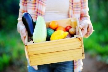 Gartenkiste für Polsterauflagen, Werzeuge und mehr