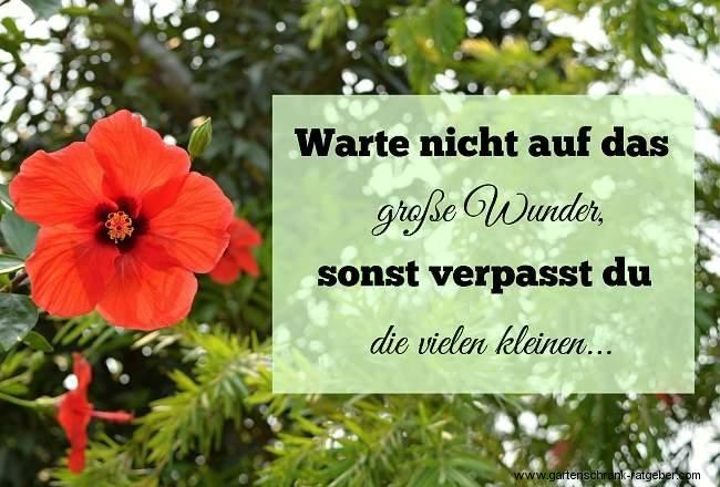 Gartenweisheiten: Warte nicht auf das große Wunder, sonst verpasst du die vielen kleinen...